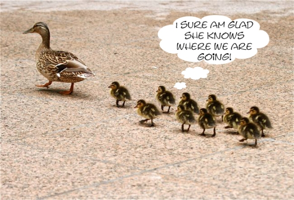 lessons-from-ducks